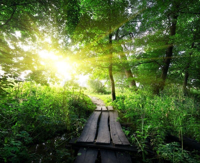 Drewniany most w lesie obraz royalty free