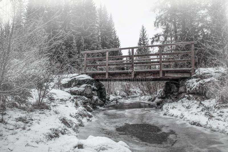 Drewniany most w lesie zdjęcia stock