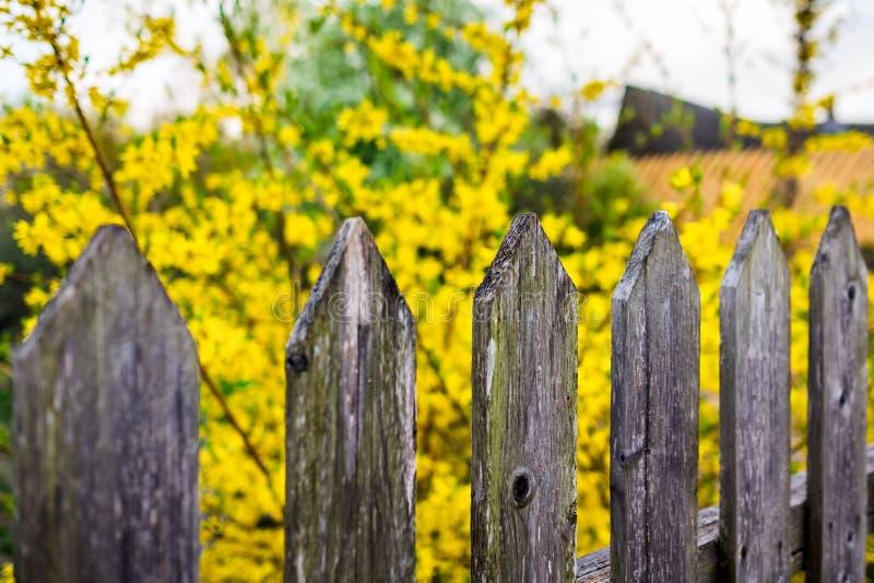 Drewniany ogrodzenie i kolory żółci zamazujący kwiaty na słonecznym dniu obrazy stock