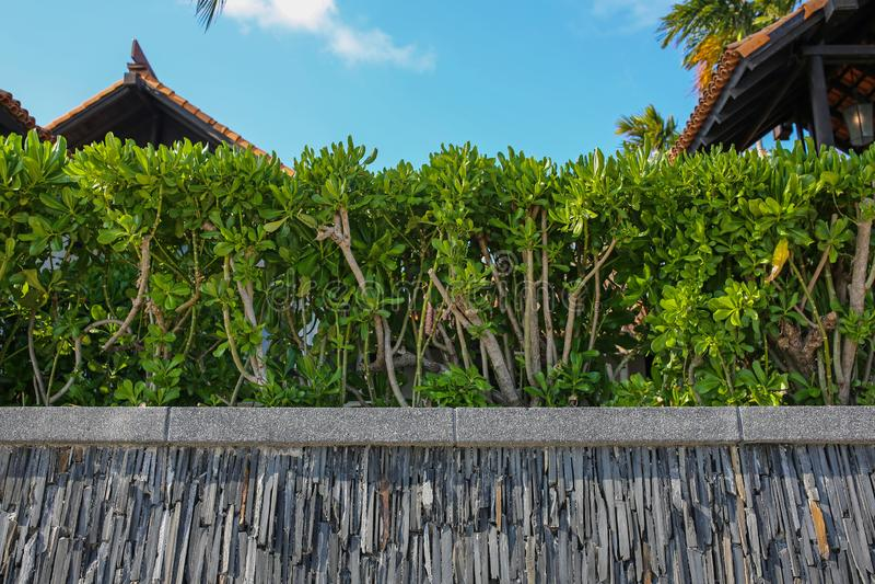 Drewniany ogrodzenie i zieleń żywopłot obraz stock