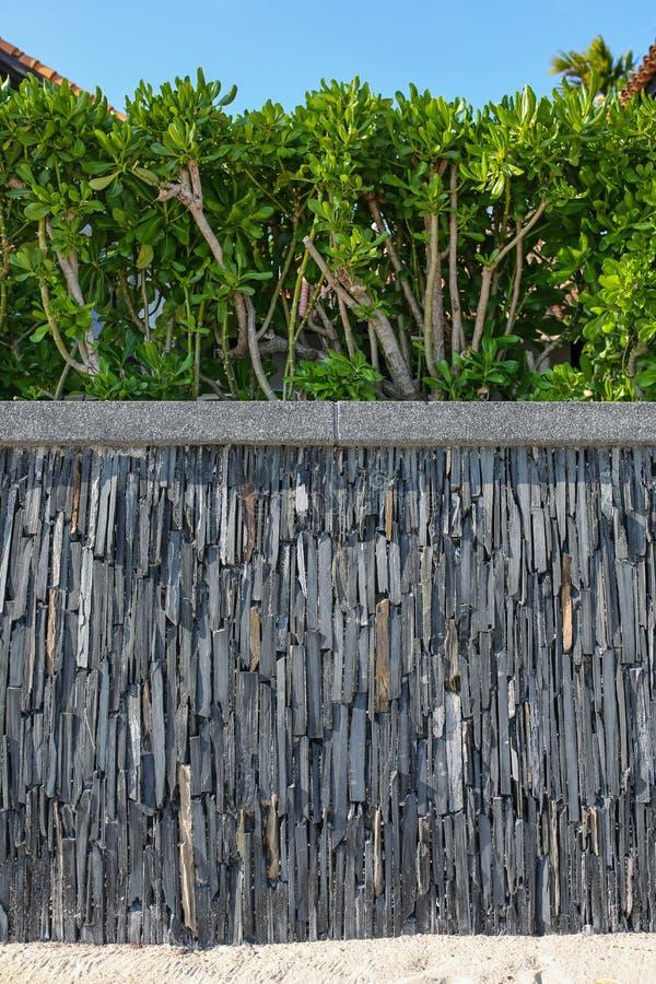 Drewniany ogrodzenie i zieleń żywopłot fotografia stock