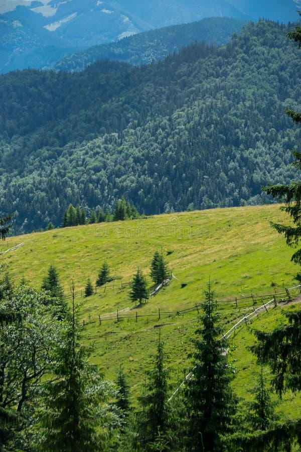 Drewniany ogrodzenie na wzg?rzu zdjęcie royalty free