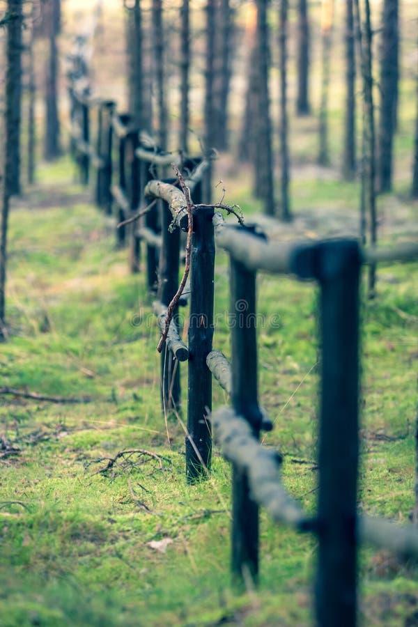 Drewniany ogrodzenie w lesie fotografia royalty free