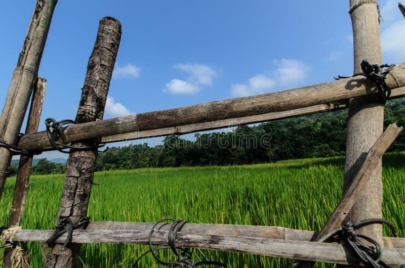 Drewniany ogrodzenie Z trawy tłem zdjęcie stock