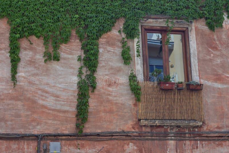 Drewniany okno i winogrady na rocznika domu fotografia stock