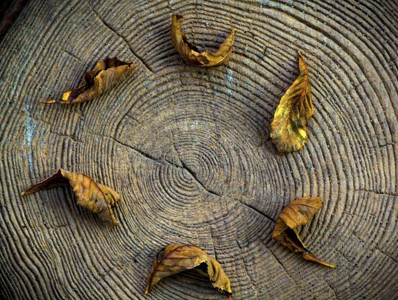 Drewniany okrąg jesieni sezonu liść obrazy royalty free