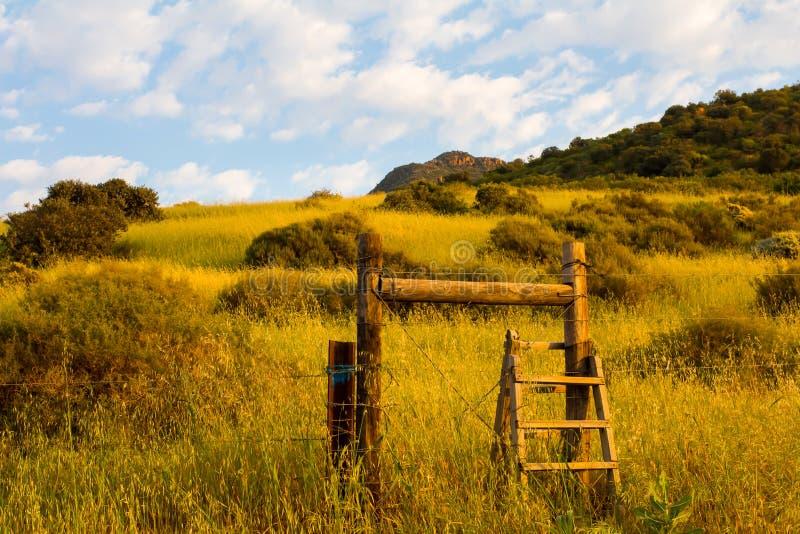 Drewniany przełaz i Trawiasty pole w ranku świetle obrazy royalty free