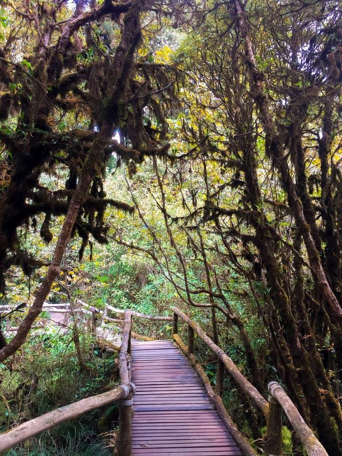 Drewniany przejście w lesie tropikalnym zdjęcie stock