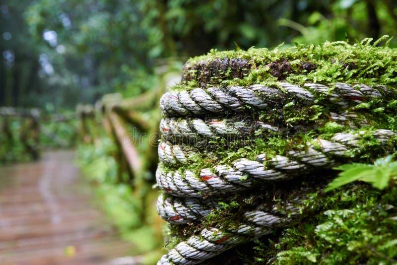Drewniany przejście zakrywający w zielonym mech obraz stock