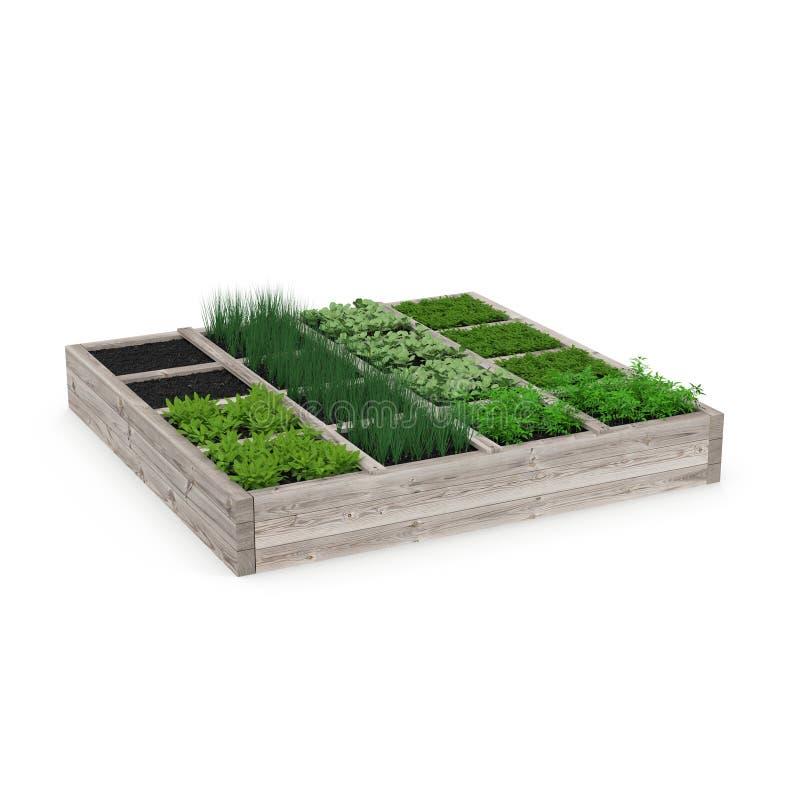 Drewniany pudełko z młodym ogródem na bielu ilustracja 3 d ilustracji