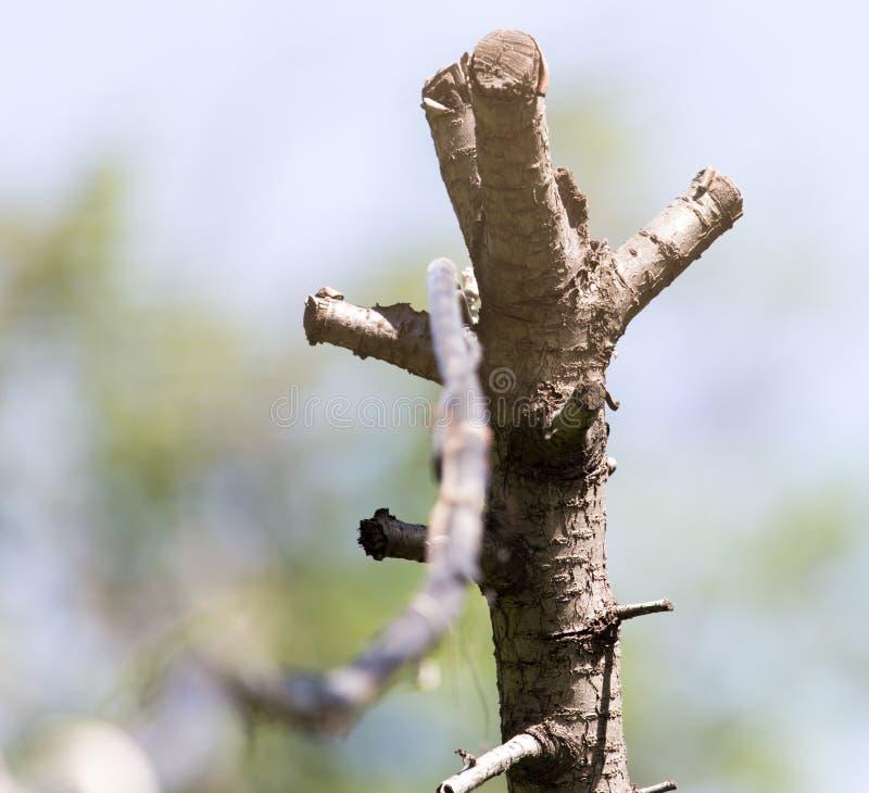 Drewniany słup z elektrycznością zdjęcie royalty free