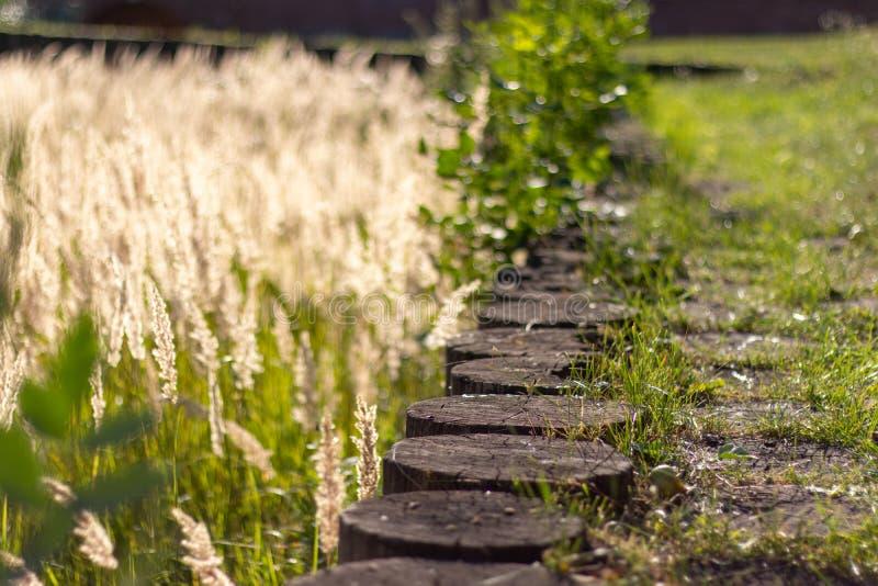 Drewniany stary brązu konopie jako ścieżka przerastająca z zieloną trawą Ogrodzenie od porosłej dużej koloru żółtego piórka trawy obrazy royalty free