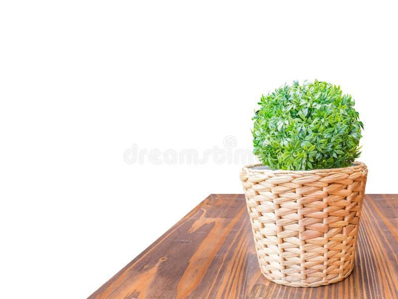 Drewniany Stołowego wierzchołka zieleni krzak w łozinowym koszu odizolowywa na bielu plecy zdjęcia royalty free
