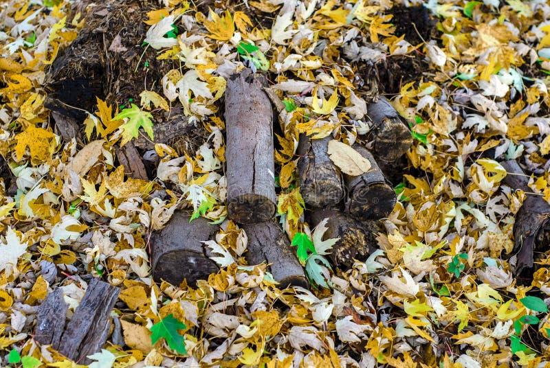 Drewniany stos Zakopujący Pod koloru żółtego i zieleni spadku liśćmi klonowymi fotografia royalty free
