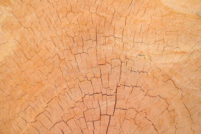 Drewniany tło i textrue zdjęcie royalty free
