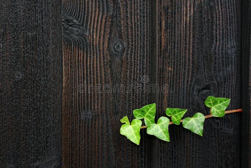 Drewniany tło, tekstura zdjęcia stock