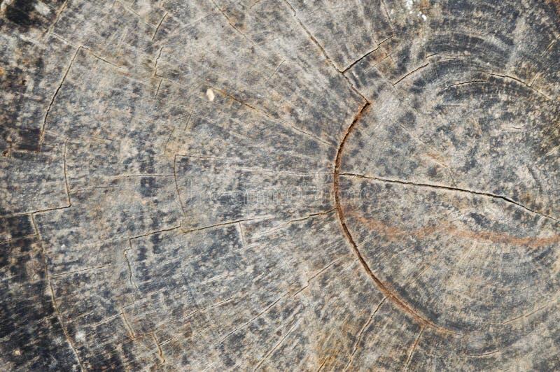 Drewniany tło Tekstura drzewny fiszorek zdjęcia royalty free