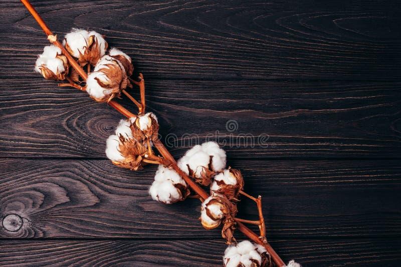 Drewniany tło z bawełną na nim zdjęcie royalty free