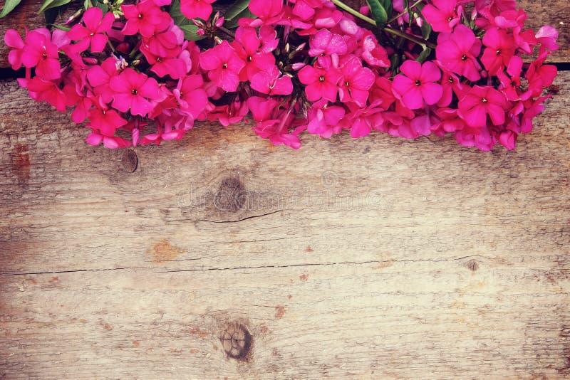 Drewniany tło z jaskrawym czerwonym floksem kwitnie na wierzchołku obrazy royalty free