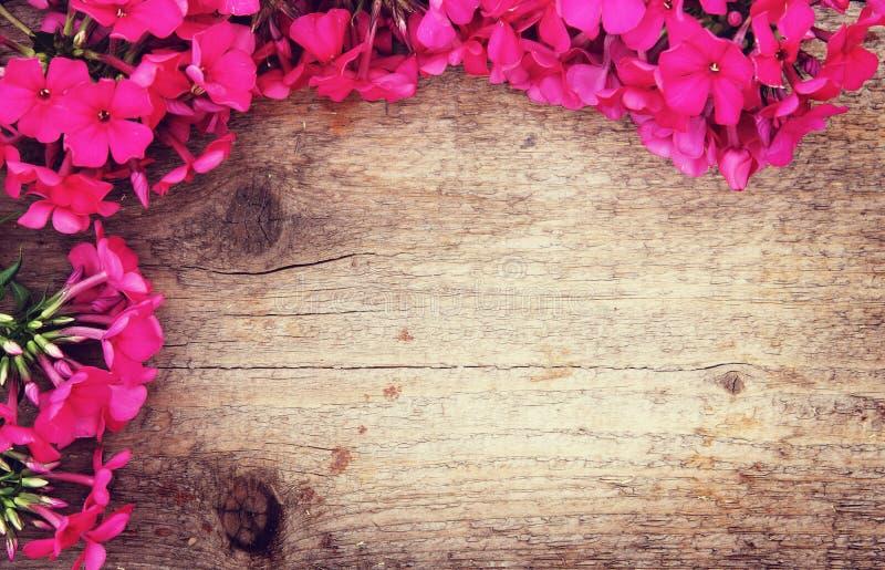 Drewniany tło z kątem robić czerwony floks kwitnie zdjęcie royalty free