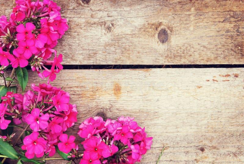 Drewniany tło z kątem robić różowy floks kwitnie fotografia royalty free