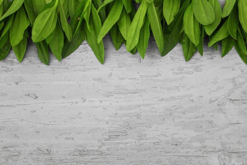 Drewniany tło z ramą zieleni liście fotografia royalty free