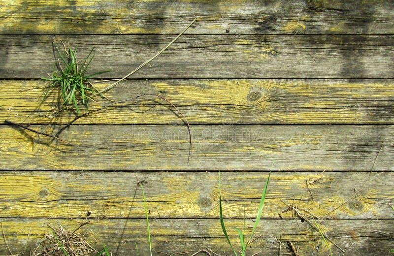 Drewniany tekstury tło z rośliną zdjęcie royalty free