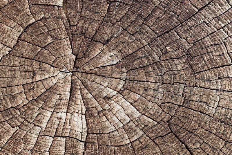 Drewniany tekstury tło Zakończenia drzewa stara krakingowa starzejąca się rżnięta bela Szczegółu woodentree bagażnik zdjęcia stock