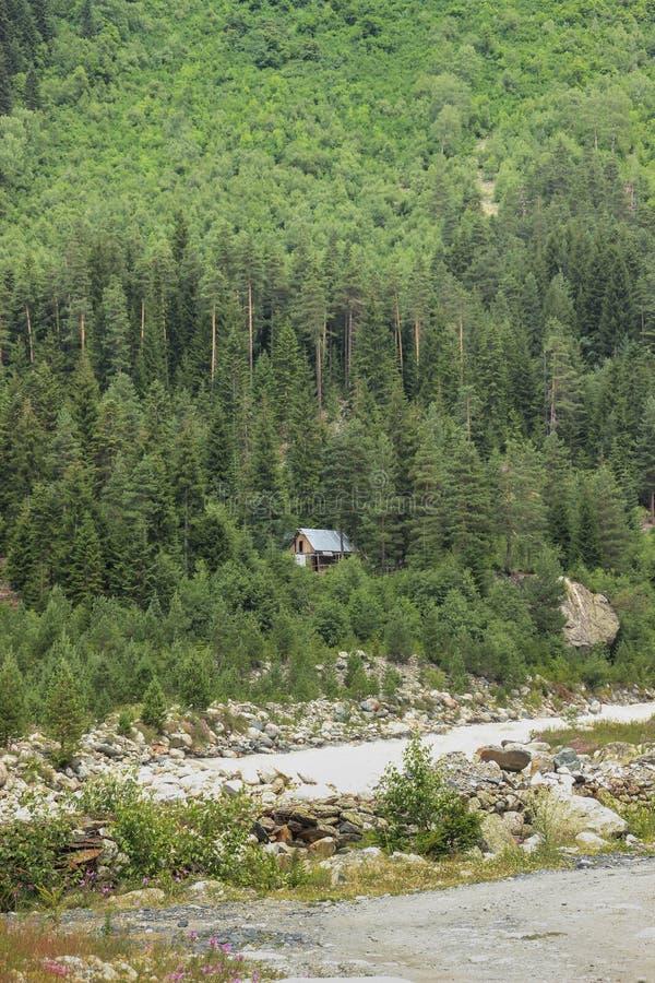 Drewniany wieśniaka dom chujący wśród zwartego sosnowego lasu i rzeki zdjęcie royalty free