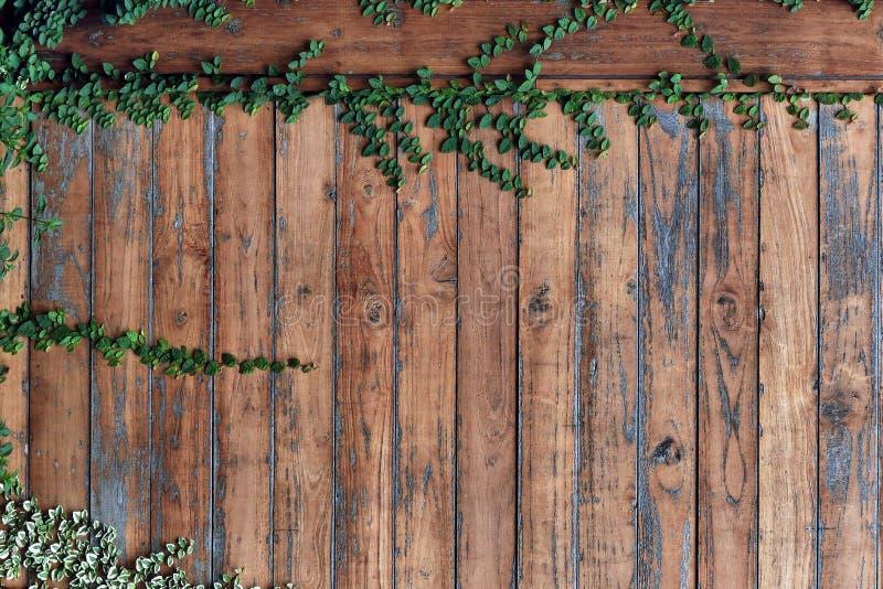Drewno ściana obrazy royalty free