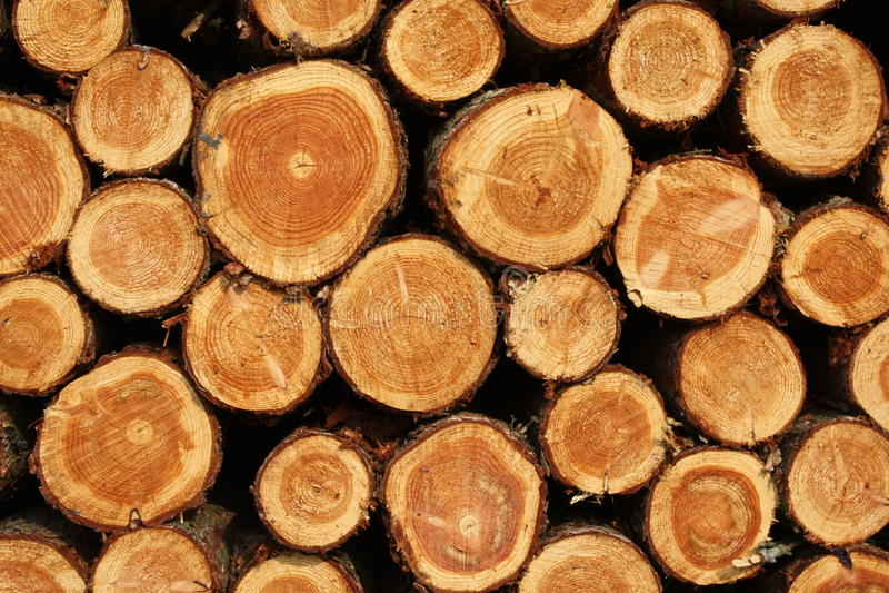 drewno zdjęcia royalty free