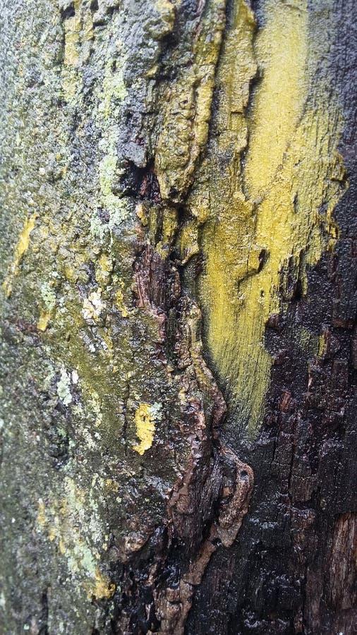 Drewno barkentyny szczegółu tekstury whit muczenie fotografia stock