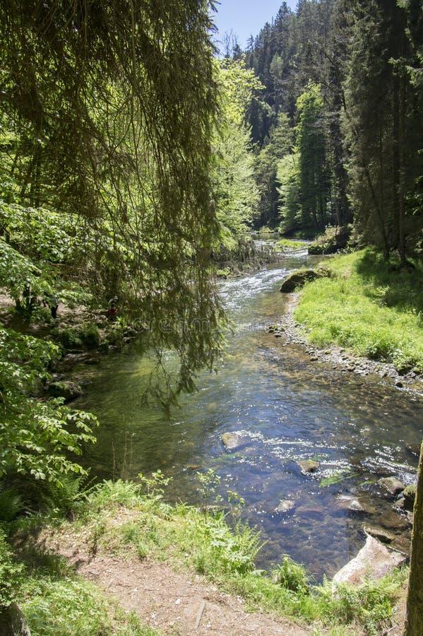 Drewno i ska?a krajobraz w czechu Szwajcaria, Kammintz George skalisty w?w?z, sasa Szwajcaria park narodowy zdjęcia royalty free