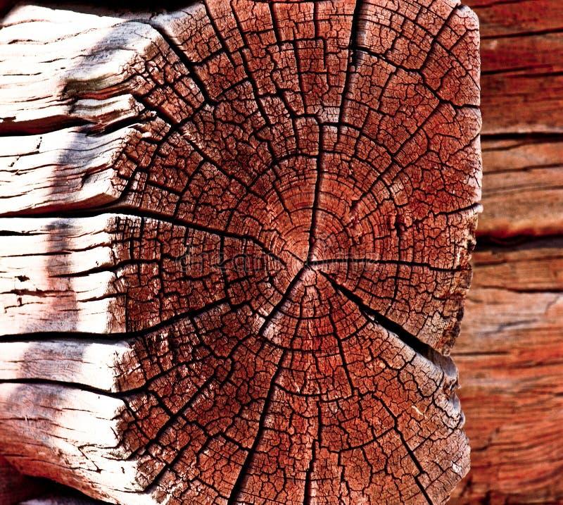 Drewno jako tło obrazy royalty free