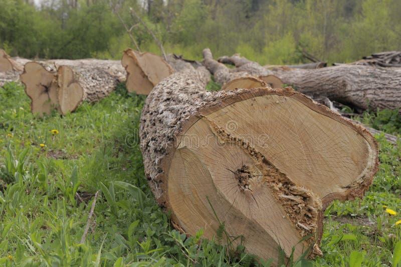 Drewno logował się trawy zdjęcie royalty free