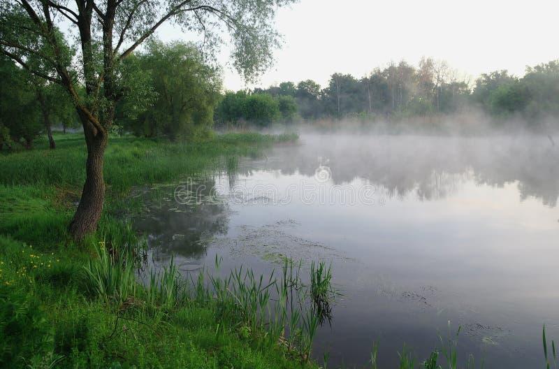 Drewno na wybrzeżu rzeka, ranek zdjęcia stock