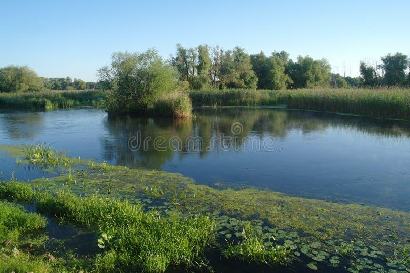 Drewno na wybrzeżu rzeka, ranek obrazy stock