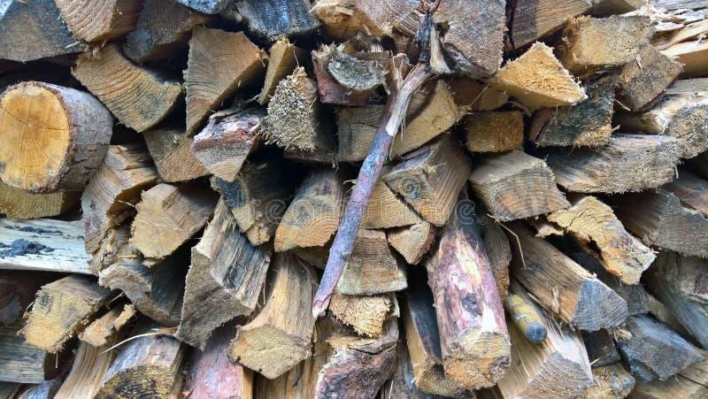 drewno na zbierający fałdowy bękart zdjęcia royalty free