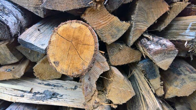drewno na zbierający fałdowy bękart zdjęcie royalty free