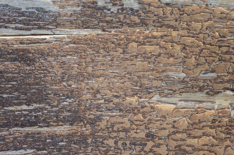 Drewno powierzchnia z krakingową farbą 3 zdjęcia stock