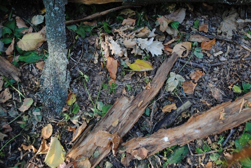 Drewno tekstura zdjęcie royalty free