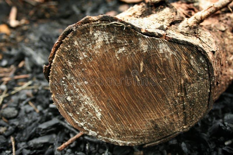 Drewno w węglu obraz stock
