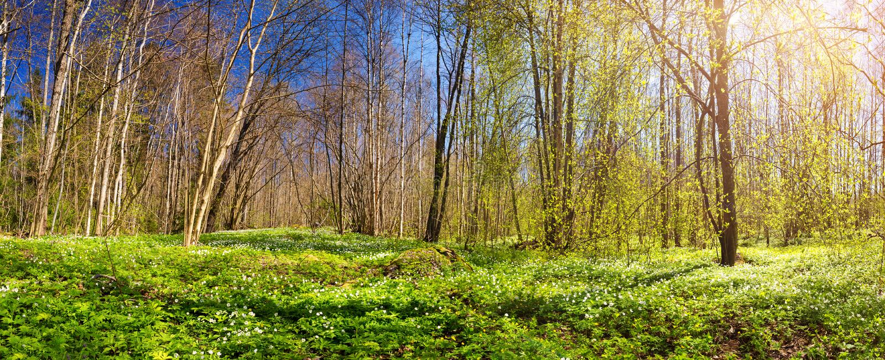 Drewno z wiosna kwiatami zdjęcia royalty free