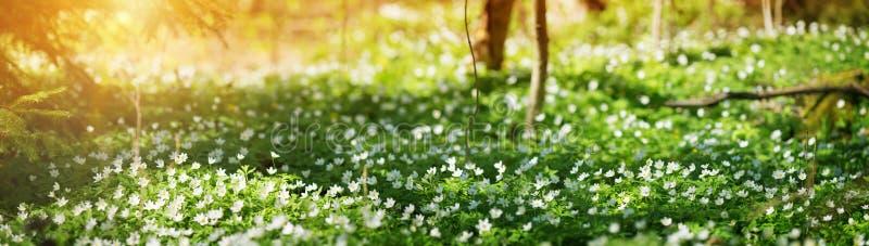 Drewno z wiosna kwiatami zdjęcia stock