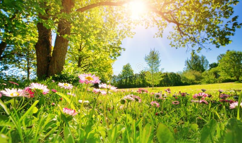 Drewno z wiosna kwiatami obrazy stock