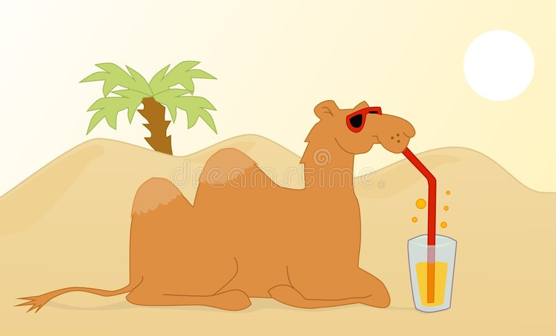 dricka för kamel stock illustrationer