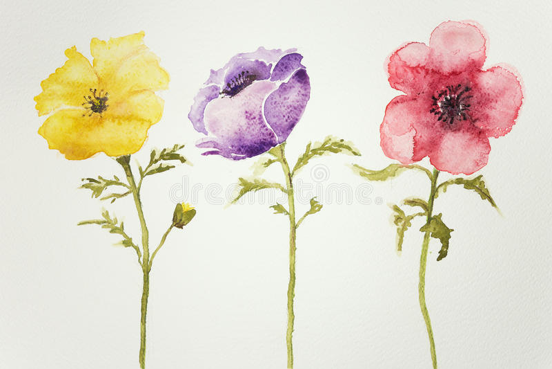 Drie anemonen royalty-vrije illustratie