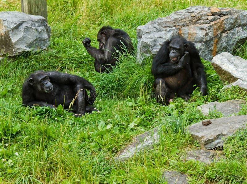 Drie apen royalty-vrije stock fotografie