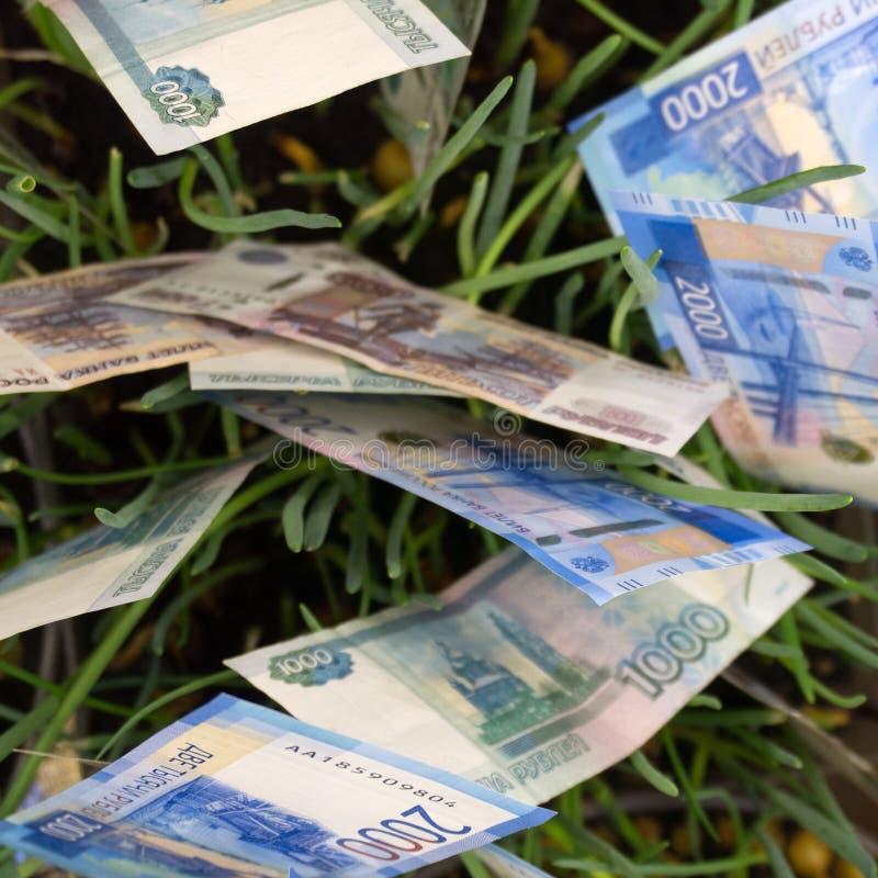 Drie Australische die dollars in tuinbed worden geplant stock foto's