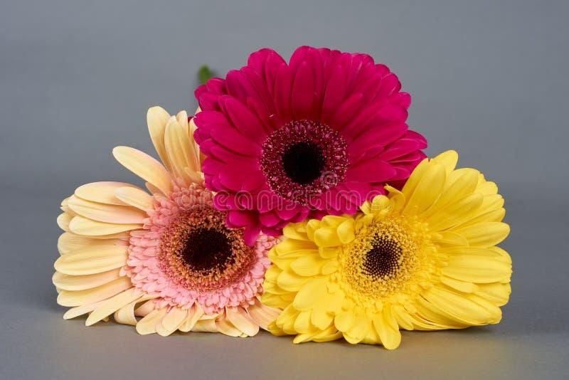 Drie Bloemen Gerbera stock afbeeldingen
